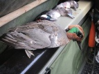 West Wind Outfitters for Duck Hunting in NJ